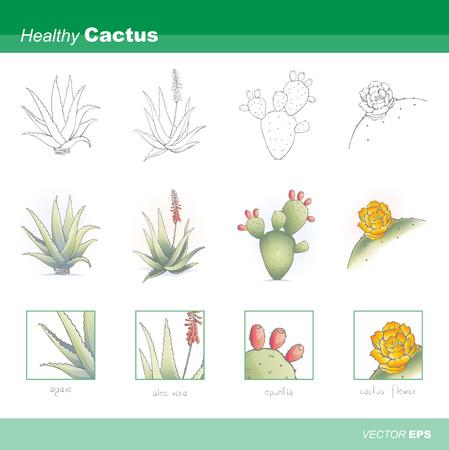 prickly pear: Healthy cactus