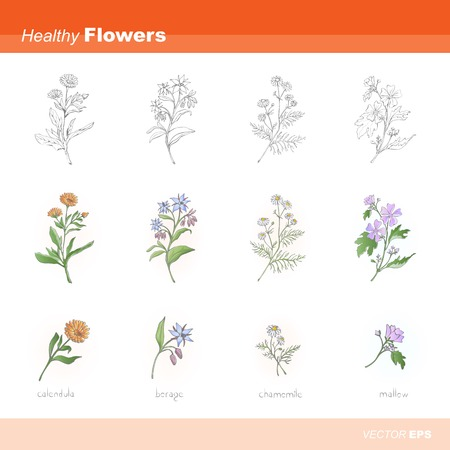 Healthy flowers Vector