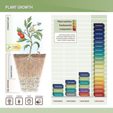 pflanze wachstum: Das Pflanzenwachstum Illustration
