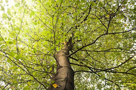 �tree: Ramas de los �rboles vista desde abajo con rayos de luz solar Foto de archivo
