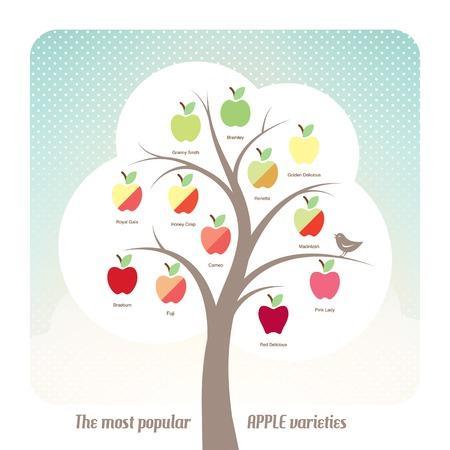 granny smith apple: Apple varieties with tree