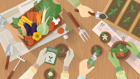 to plant: Gardeners hands working together on a wooden table top view with gardening tools, they are planting seeds and plants and carrying a vegetables crate Illustration