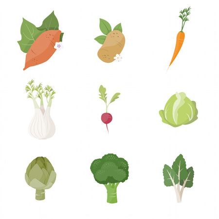 Garden fresh vegetables set on white background, including sweet potato, potato, carrot, fennel, radish, cabbage, artichoke, broccoli and chard Ilustrace