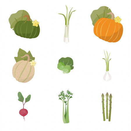 Garden fresh vegetables set on white background, including pumpkin, scallions, melon, brussels sprouts, garlic, radish, celery, asparagus Illustration
