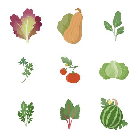 leaf lettuce: Garden fresh vegetables set on white background, including red leaf lettuce, squash, spinach, parsley, tomato, cabbage, arugula, chard, watermelon