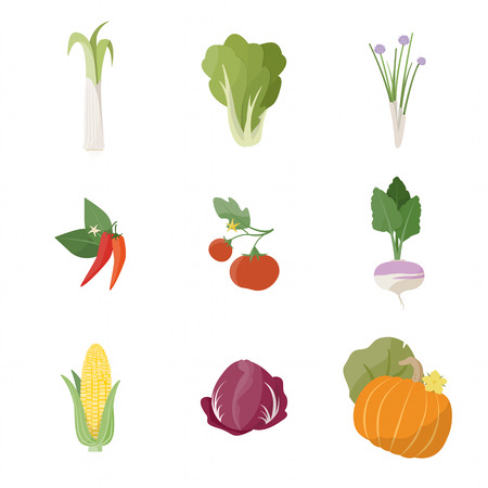 September Garden fresh vegetables on white background including leek lettuce chives chili pepper tomato turnip corn chicory and pumpkin