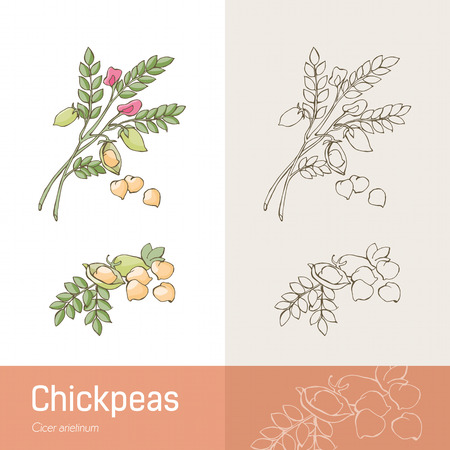 botanical remedy: Hand drawn chickpeas with plant, beans and flower
