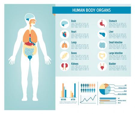 abdomen plano: Infografía cuidado de la salud del cuerpo humano, con médicos iconos, órganos, cuadros, diagramas y copia espacio