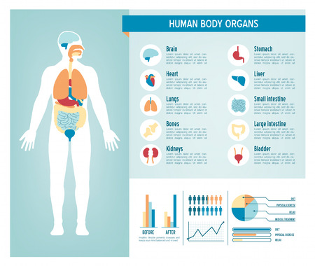 Human body health care infographics, with medical icons, organs, charts, diagrams and copy space Vettoriali