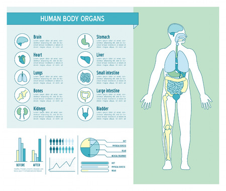human anatomy: Human body health care infographics, with medical icons, organs, charts, diagarms and copy space