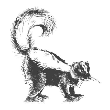 stink: Aggressive bad skunk hand drawn sketch