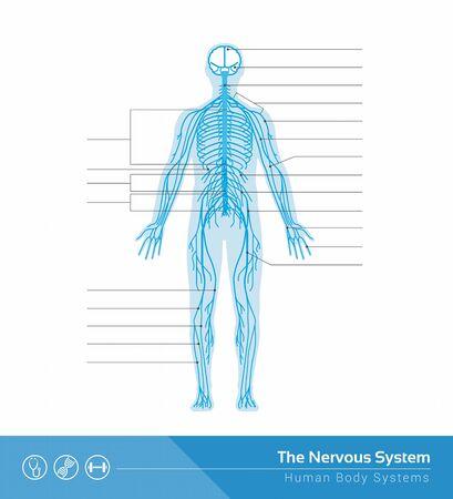 The human nervous system vector medical illustration Çizim