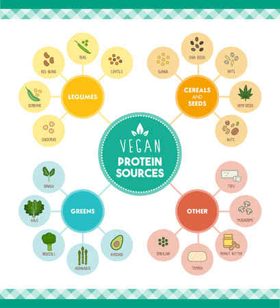 Vegan protein food sources infographic with food icons and categories Imagens - 58290130