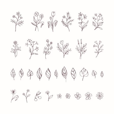botanical drawing: Hand drawn plants, flowers and leaves set on white backdrop