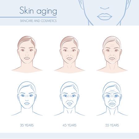Envejecimiento de la piel etapas en las caras femeninas, cuidado de la piel y la belleza infografía Ilustración de vector