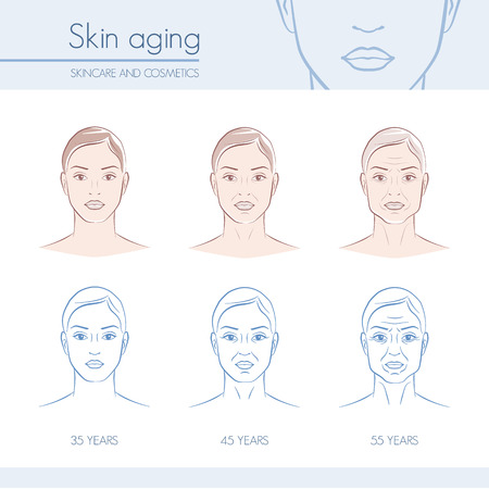 aging woman: Skin aging stages on female faces, skincare and beauty infographic