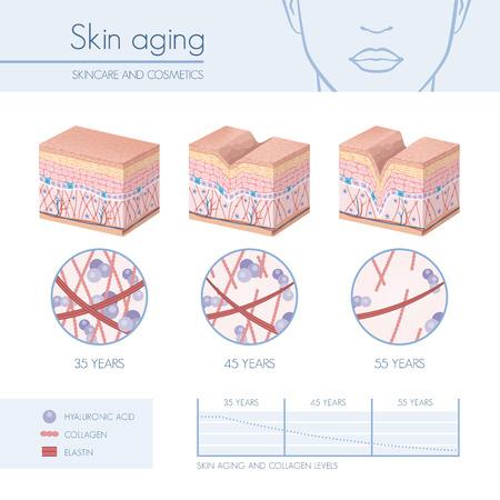 envejecimiento de la piel etapas de diagramas, colágeno y elastina disminución progessive primer, infografía cuidado de la piel Ilustración de vector