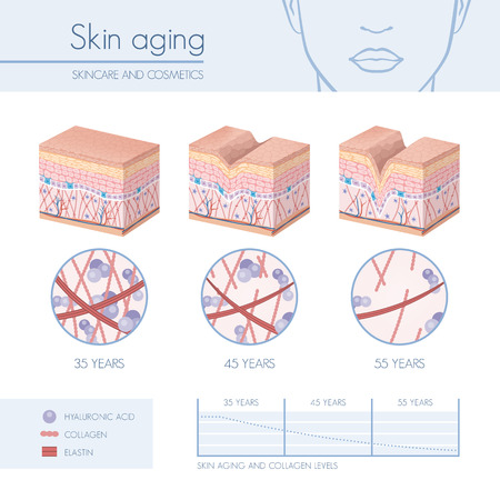 Skin aging stages diagrams, collagen and elastin progessive decrease close up, skincare infographics
