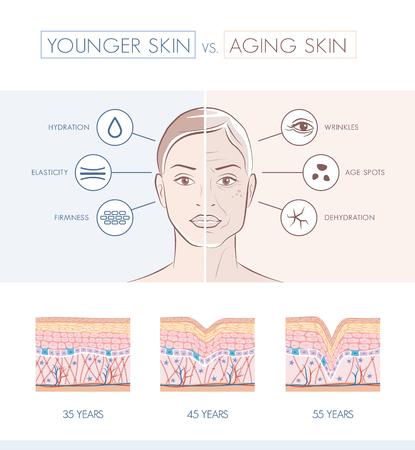 Młodych zdrowych sking i starszych Porównanie skóry, skóry i zmarszczki Schemat warstw