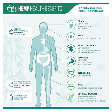 Medicinal hemp health benefits vector infographic with human body and icons Illustration