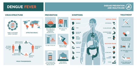 Dengue virus infographic: virus structure, transmission, prevention, symptoms and treatment