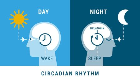 The circadian rhythm and sleep-wake cycle: how exposure to sunlight regulates melatonin secretion and body processes during day and night Vettoriali