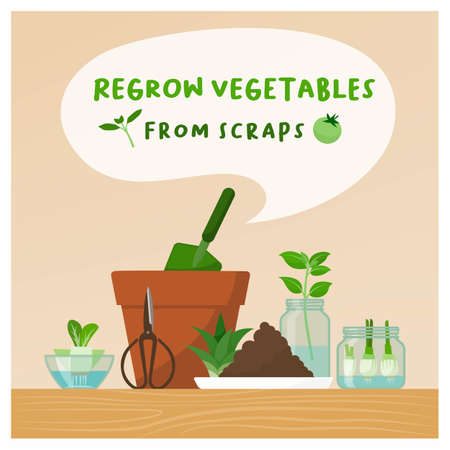 Regrow vegetables from scraps at home: zero waste, DIY gardening and healthy food concept