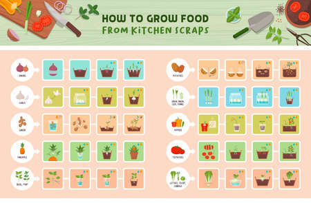 How to grow food from kitchen scraps infographic: how to grow vegetables from leftovers step by step guide, healthy sustainable living concept Ilustração
