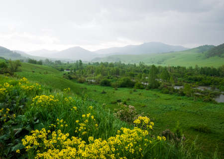 landscape flowers: Siberian landscape, flowers in the front, river flowing in the valley, mountains in background. Altai, Russia.