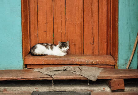 porch scene: Cute cat lie on the porch of country house. Countryside scene. Village life. Stock Photo
