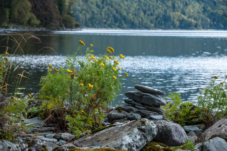 Yellow wildflowers and balanced stack of stones on the shore of Teletskoye lake. Altai mountains, Siberia, Russia.
