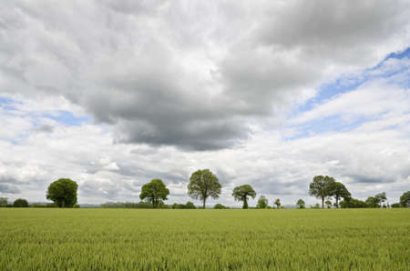 Green field with trees and cloudy sky Stock Photo