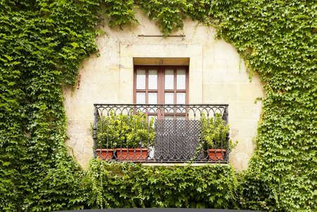 Beautiful window in an old building covered with ivy