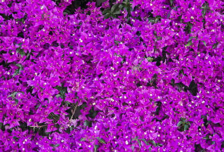 Purple flowers  Lot of purple flowers, background Stock Photo