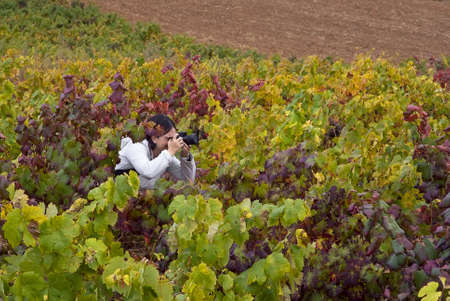 Young woman takes nice picture with a reflex camara in a vineyard photo