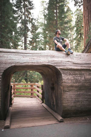 Young man over the tunnel cut through a sequoia tree in Sequoia National Park in California