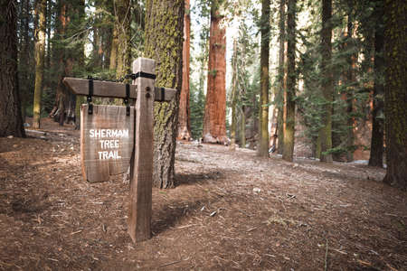 the sentinel: sequoia national Park