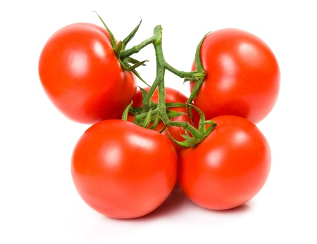 The branch of tomatoes isolated on the white photo
