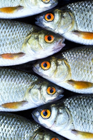 Fish background Stock Photo - 10058291