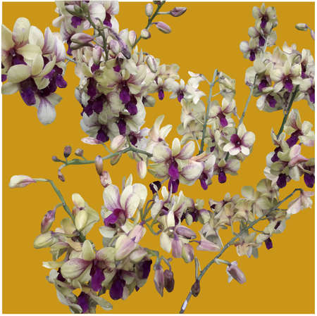 white and purple orchids on a golden background. Vector design ornaments.