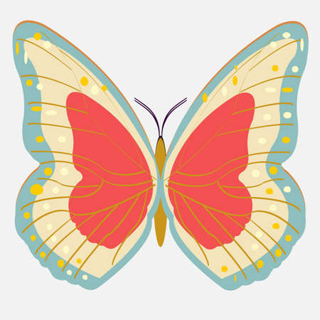 wonderful and colorful butterfly vector