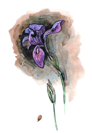 alone in the dark: Watercolor hand painted illustration with alone iris on dark background Stock Photo
