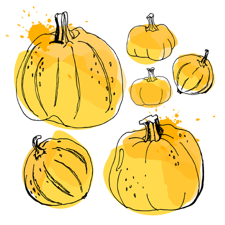 of helloween: Pumpkin, drawing by watercolor and ink with paint splashes on white background.