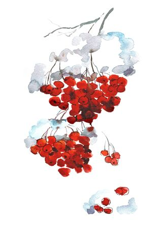Watercolor background  with snowy mountain ash . Red berries