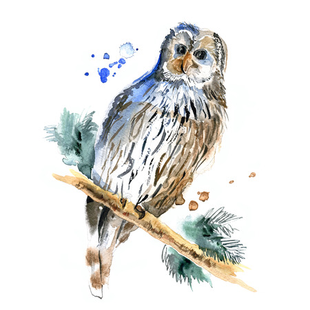 illustration of owl on a white background
