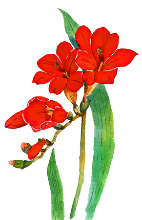 Watercolor hand painted red exotic flowers
