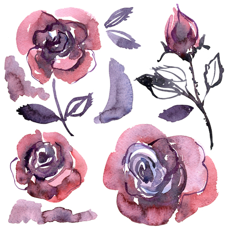 Watercolor hand painted purple roses. Elements for design of invitations, wedding cards, birthday cards