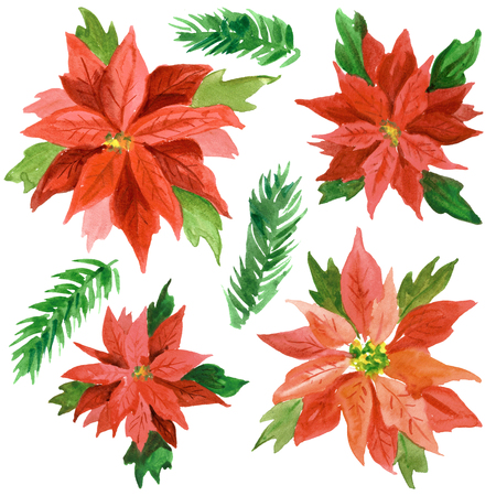 Watercolor Christmas background with poinsettia flowers