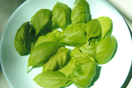 freshly picked basil leaves, healthy herbs Banque d'images