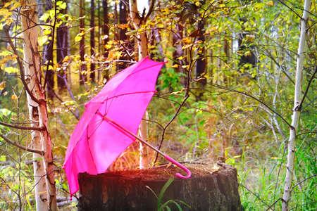 Autumn season. Autumn mood. Pink umbrella on a rotten tree stump in the autumn forest